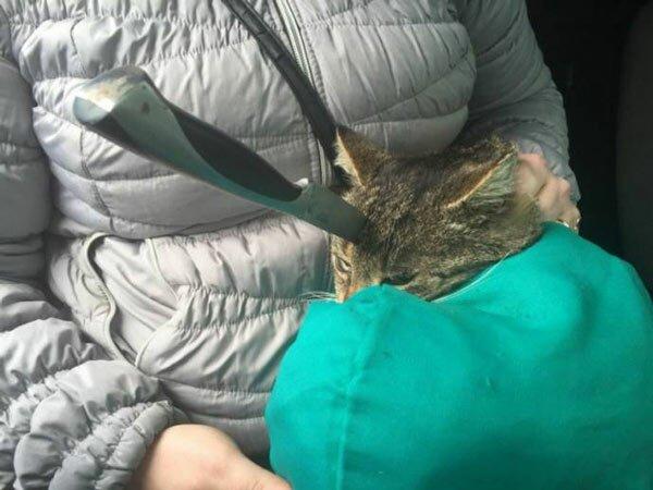 Коту вонзили нож в голову. Чудовищная история!